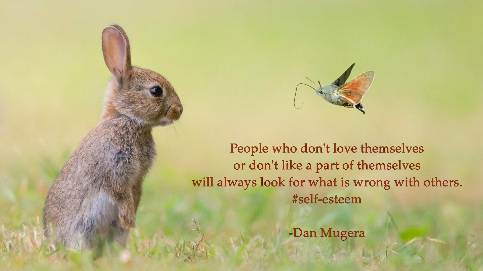 Dan Mugera Quotes, love quotes, people quotes
