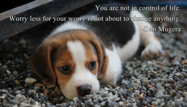 Quotes by Dan Mugera, life quotes, worry quotes, change quotes